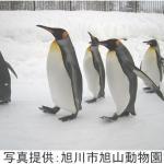 『旭山動物園』の感動を、銀座・ソニービルで体感!