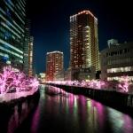 目黒川に冬の桜!『目黒川みんなのイルミネーション』