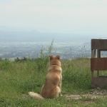 『犬と猫と人間と2』